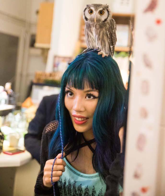 140625-owl-cafe-tokyo-petting-owls-japan-23